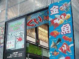 金魚専門店 きんとと、