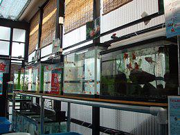 金魚専門店 きんとと、 イメージ