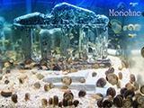 モリオーネ美術水族館 イメージ