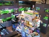 水草専門店ウィステリア イメージ