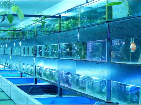 茨木観魚園 イメージ