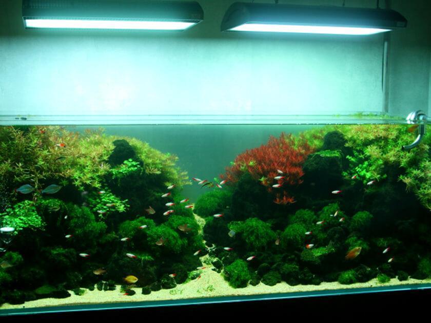 Little interior aquarium